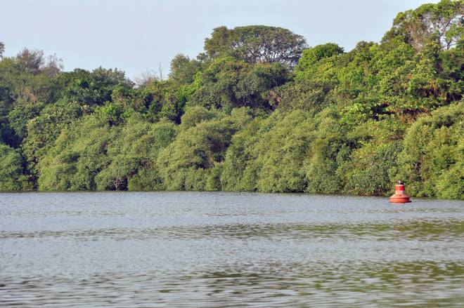 A Mangrove-Lined waterway for Kollam