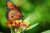 butterfly-park-thenmala