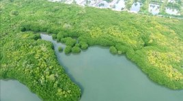 ariyamthengu-mangrove-forest